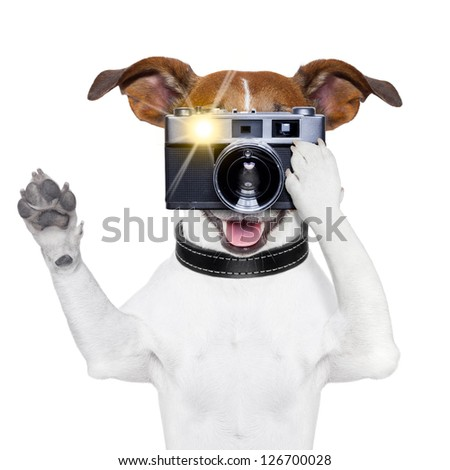 dog taking a photo with an old camera and flashing - stock photo