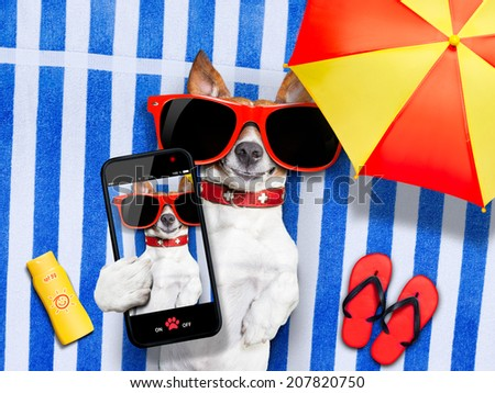 dog taking a selfie while lying on towel being so cute and cool at once ,sun tanning - stock photo
