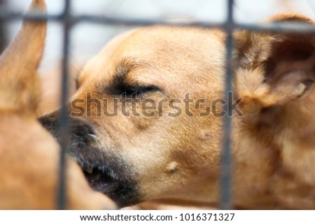 Dog taking bugs away with closed eyes