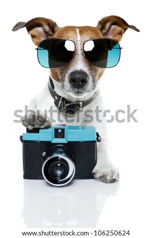 dog taking pictures with a fancy photo camera - stock photo