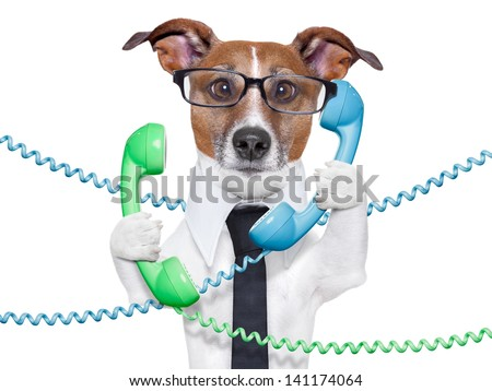 dog tangled in  a telephone and cable chaos - stock photo