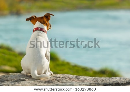 dog thinking and watching about the future - stock photo