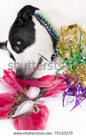 dog tired after long party - stock photo