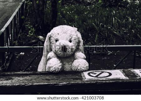 dog toy - stock photo