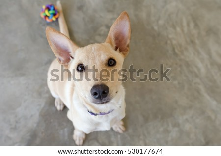 Dog Bowl Hungry Happy Closeup Funny Stock Photo - Dogs looking funny with toys