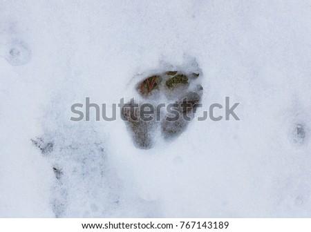 Dog tracks snow stock photo 767143189 shutterstock dog tracks in the snow publicscrutiny Choice Image