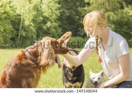Dog trainer trains irish setter to give high five - stock photo
