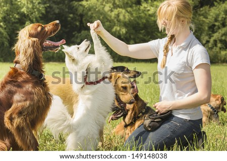 Dog trainer trains pomeranian to sit up and beg - stock photo