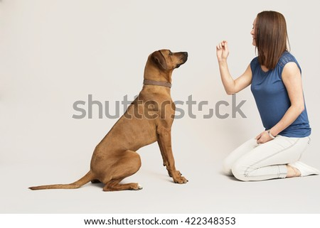 Dog training in studio with owner.