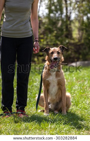 dog training, school for dogs