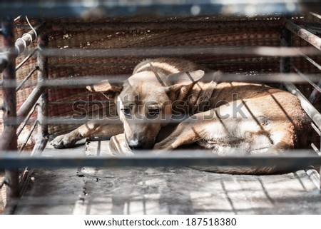 Dog trapped - stock photo