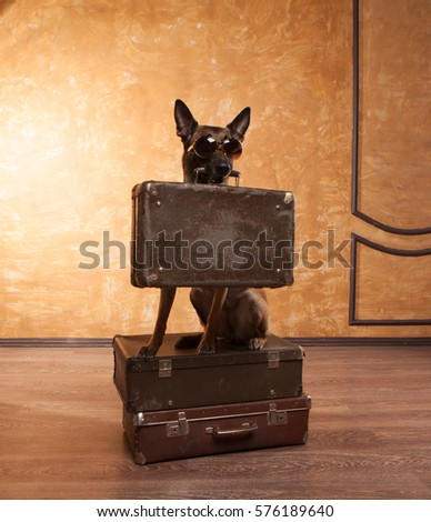 dog traveler with cases in eyeglassess