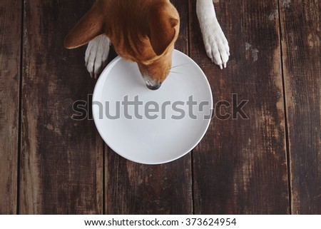 Dog tries to eat from empty ceramic plate on old vintage brushed wooden table with white top view. Concept - stock photo