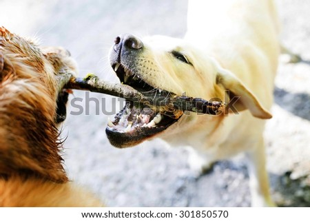 dog tug of war over stick