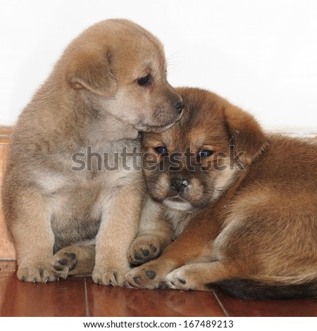 Dog-two puppies
