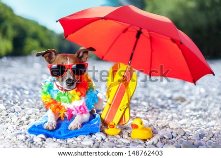 dog under umbrella at beach with yellow rubber ducks