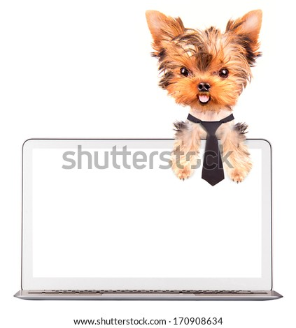 dog using a computer laptop with empty screen - stock photo
