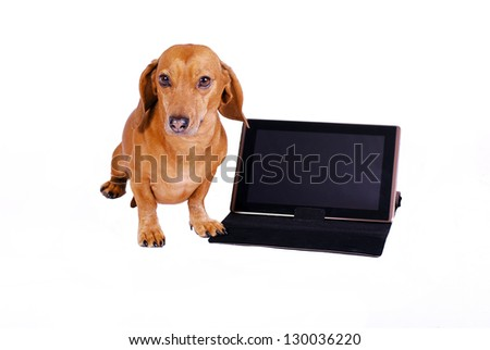 dog using computer - stock photo