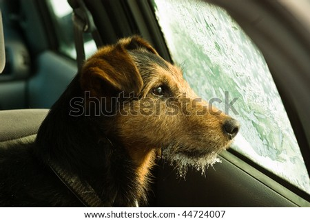 dog, waiting in the frosted car - stock photo