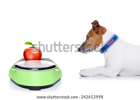 dog waiting to start eating  healthy apple, for diet,  isolated on white background - stock photo
