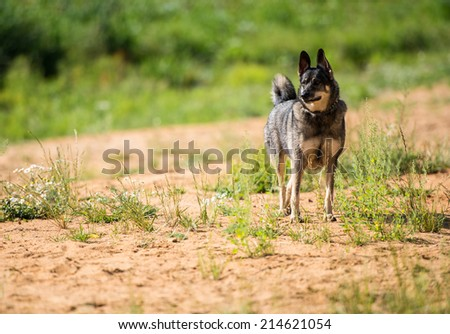 Dog waits for owner - stock photo
