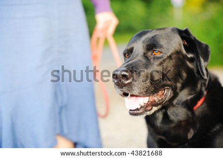Dog Walk - stock photo