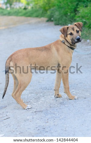 Dog walking in the park - stock photo
