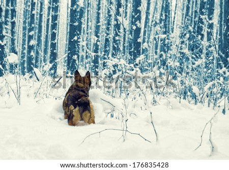 Dog walking in the snowy forest - stock photo