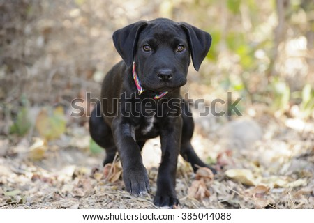 Dog walking is a closeup of a cute dog taking a walk in a nature setting. - stock photo