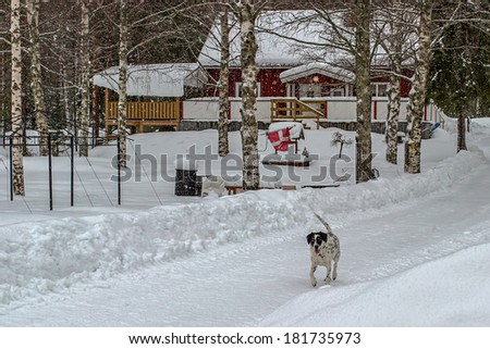 Dog walking on a snowy road with a house in the background while it is snowing a little
