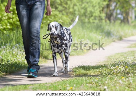 dog walking with the owner -- they are te best friends - stock photo