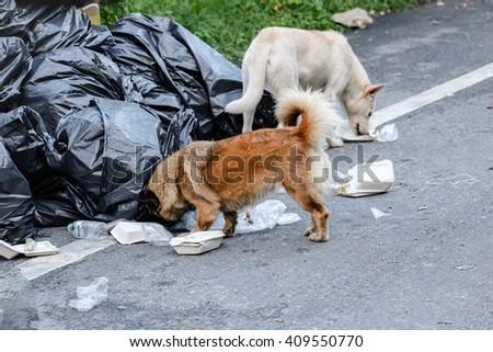 Dog waste picker - stock photo