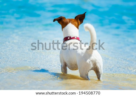 dog watching at the beach into the ocean - stock photo