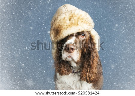 dog wearing a winter hat with a snowy background
