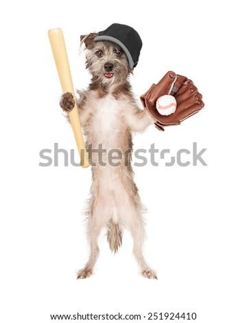 Dog wearing baseball hat  - stock photo