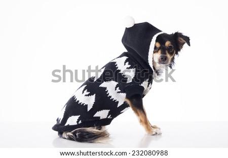 Dog wearing black jersey watching the camera - stock photo