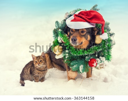 Dog wearing christmas wreath and santa hat sitting with kitten outdoors in snow - stock photo