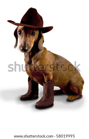 Dog wearing cowboy hat and boots