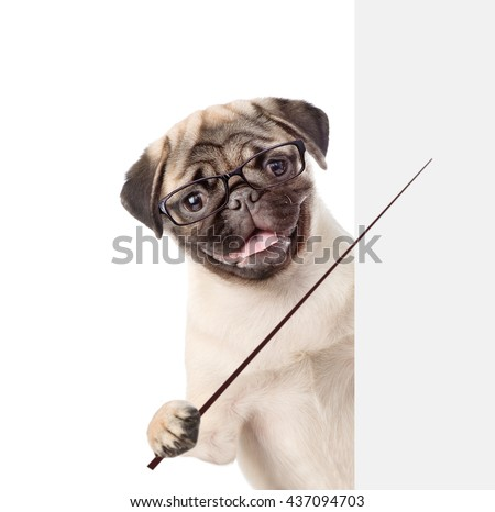 Dog wearing glasses holding a pointing stick and points on empty banner. isolated on white background