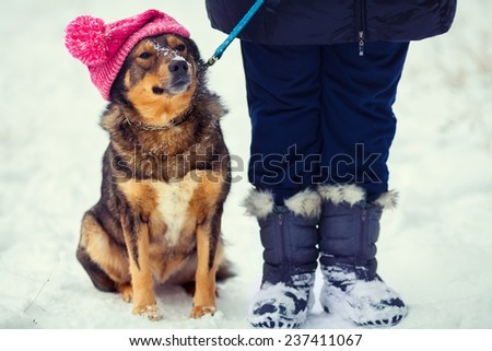 Dog wearing knitted hat with pompom walking with owner outdoor snowy in winter