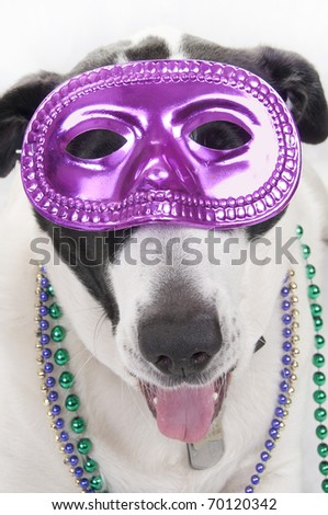dog wearing mask for party - stock photo