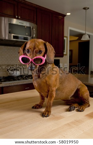 Dog wearing pink sunglasses sitting on kitchen table