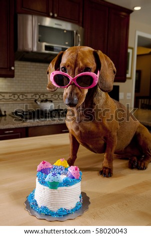Dog wearing pink sunglasses with birthday cake