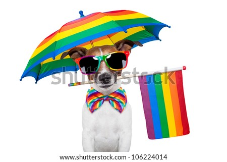 dog wearing rainbow glasses and a rainbow flag - stock photo