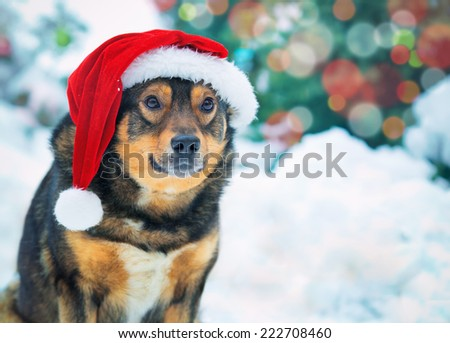 Dog wearing Santa hat outdoor in snowy forest - stock photo
