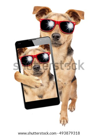 Dog wearing sunglasses and posing for a selfie shot with mobile isolated