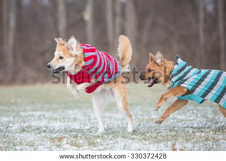 dog wearing sweater playing in the snow - stock photo