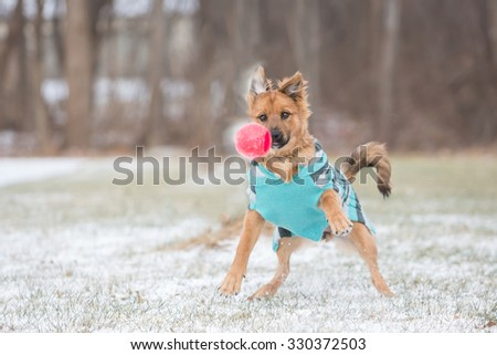 dog wearing sweater playing in the snow