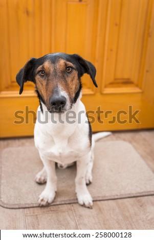 dog welcome home  - stock photo