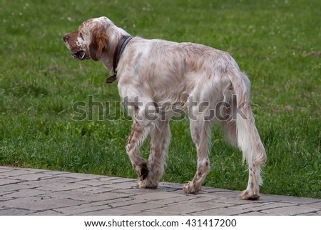 Dog who is ready for the hunt - stock photo